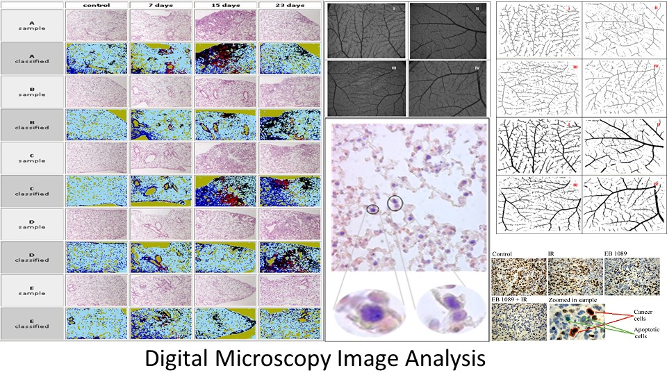 Digital Microscopy Image Analysis